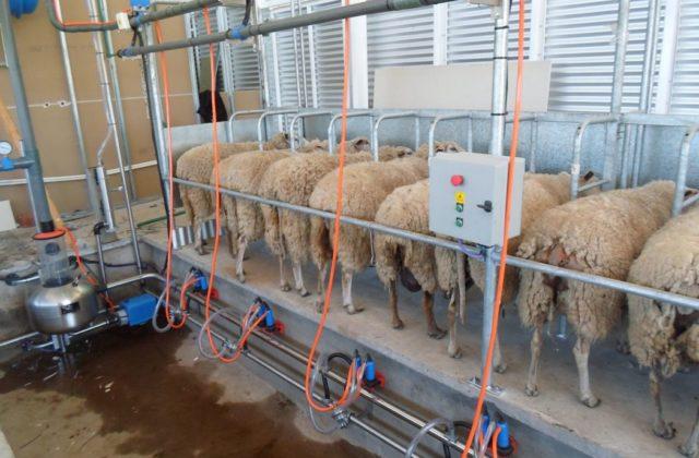 Máquinas ordeñadoras para cabras y ovejas